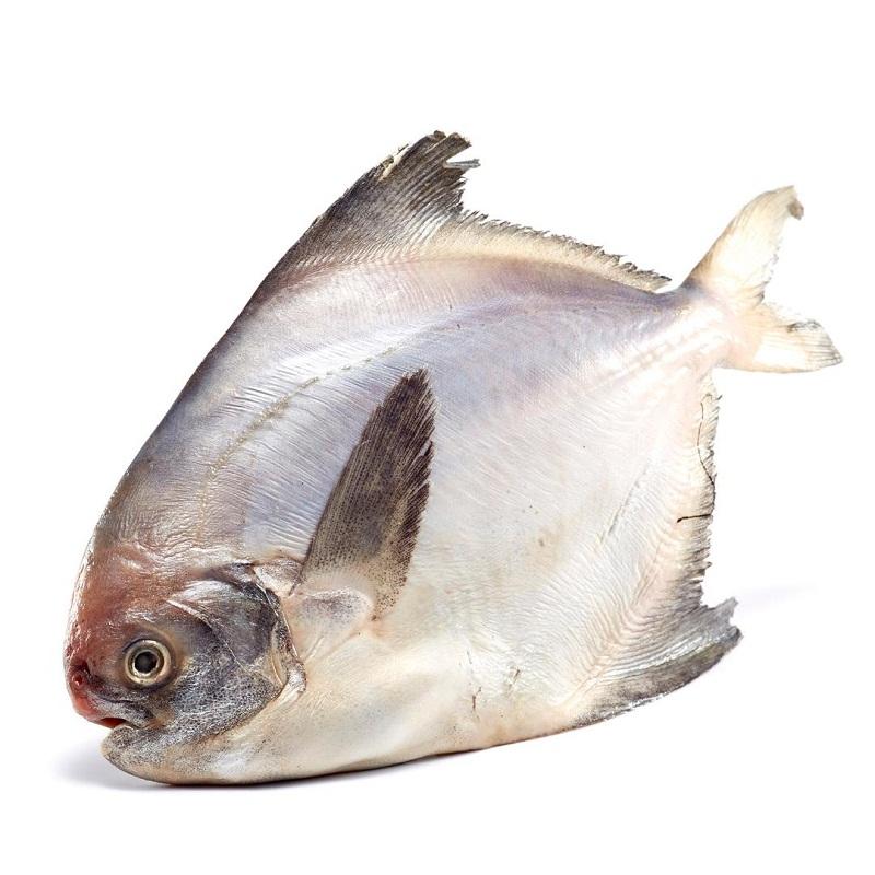 东海野生鲳鱼(300g)
