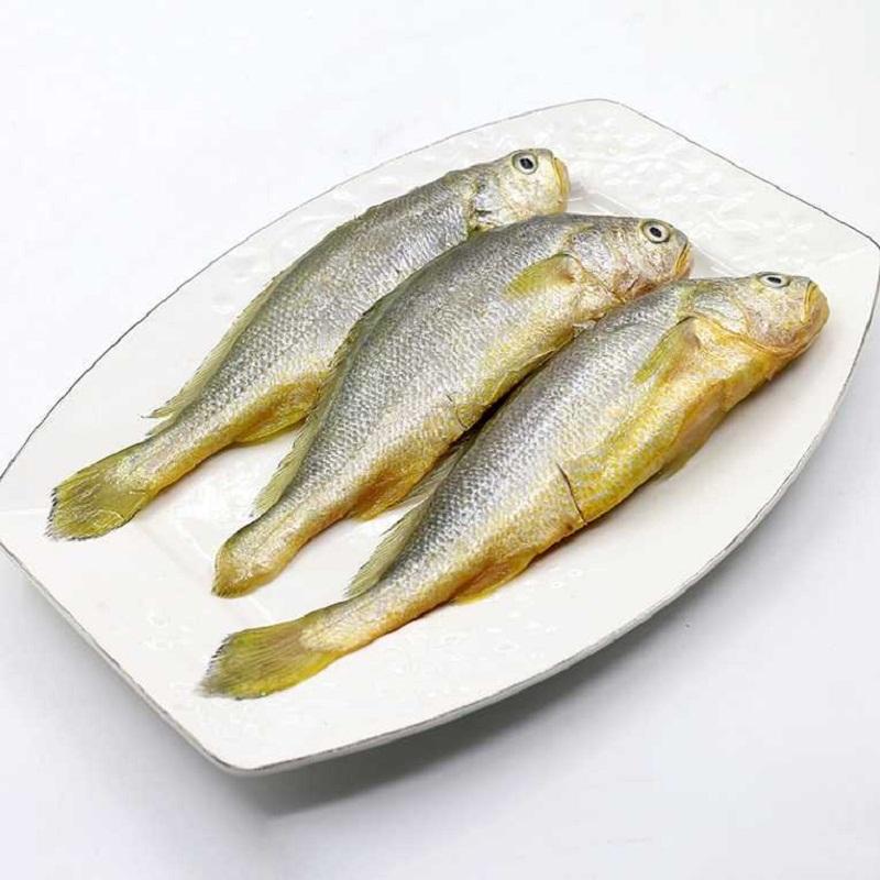 东海野生小黄鱼